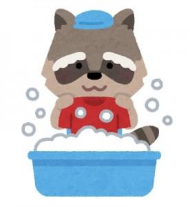アライグマ洗濯